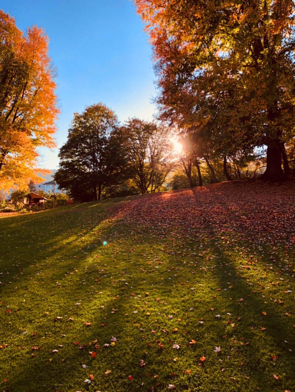 Ein Foto von einem Park im Herbst mit tief stehender Sonne und herbstlichen Baeumen in Rottoenen und gold gelbem Blaetterdach.