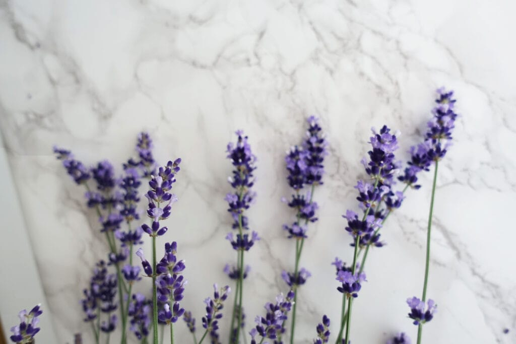 Lavendel und frische Lavendelblüten auf Marmorhintergrund.