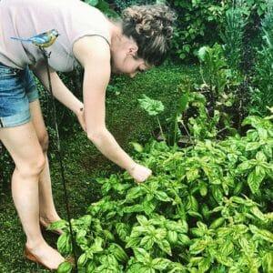 Sandra vom Paradieschen Blog pflueckt frischen Basilikum