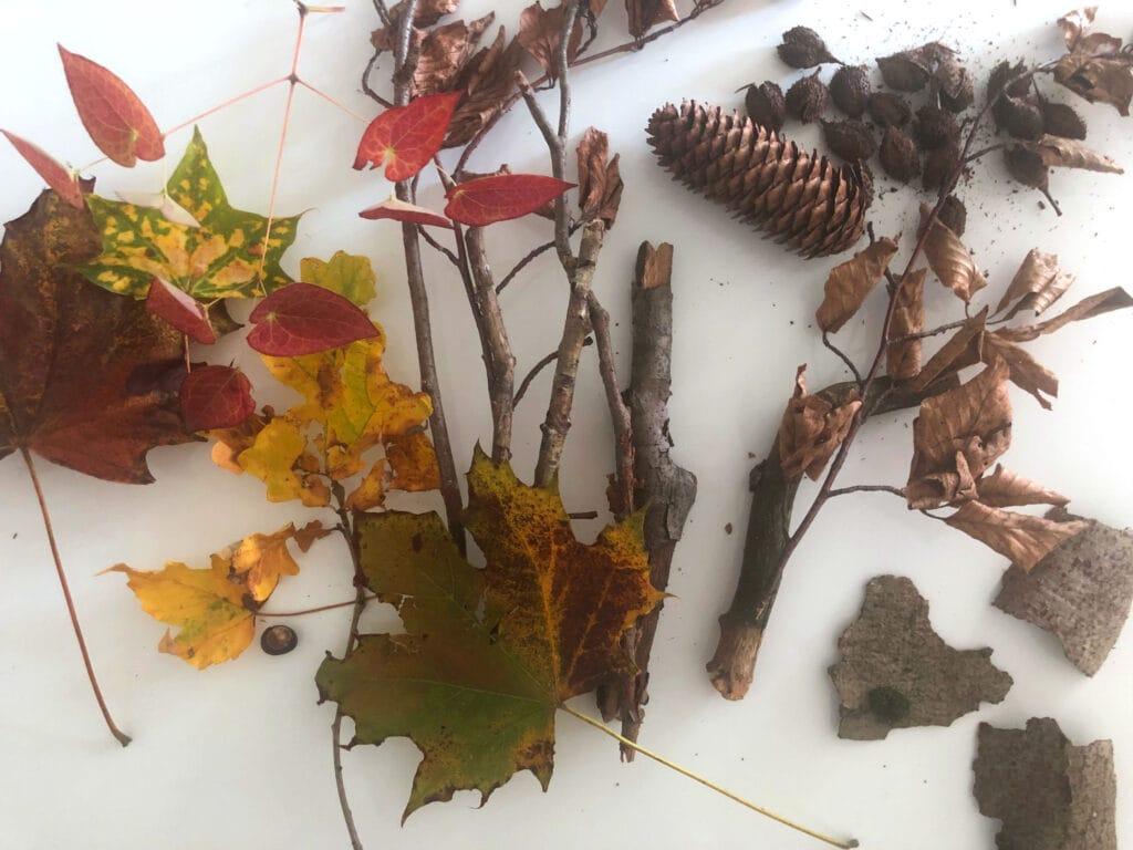 Naturmaterial um Herbstdeko zu basteln
