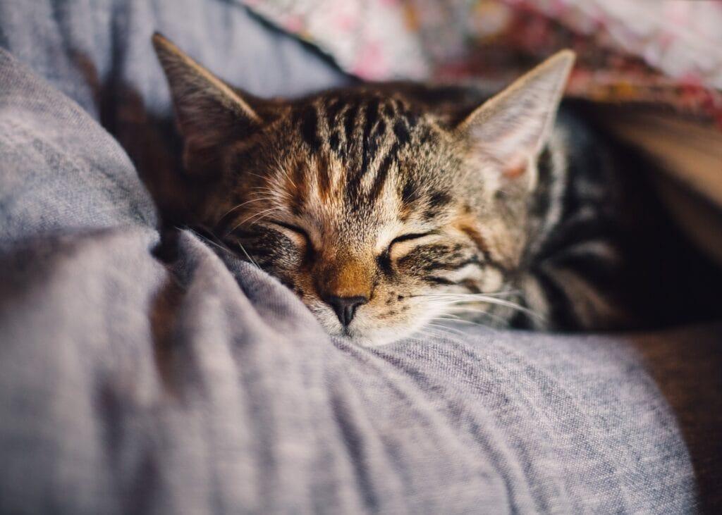 Besser schlafen mit diesen 13 Tipps