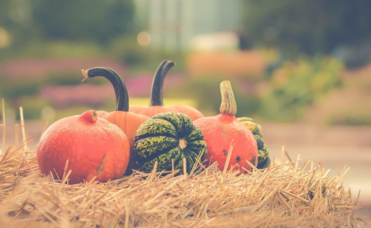orangefarbene und gruene kuerbisse auf einem heuhaufen im Herbst