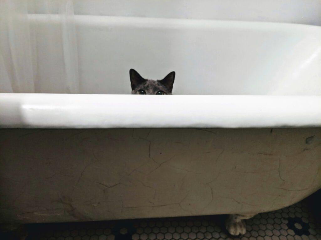 eine-katze-guckt-aus-der-badewanne-im Herbst