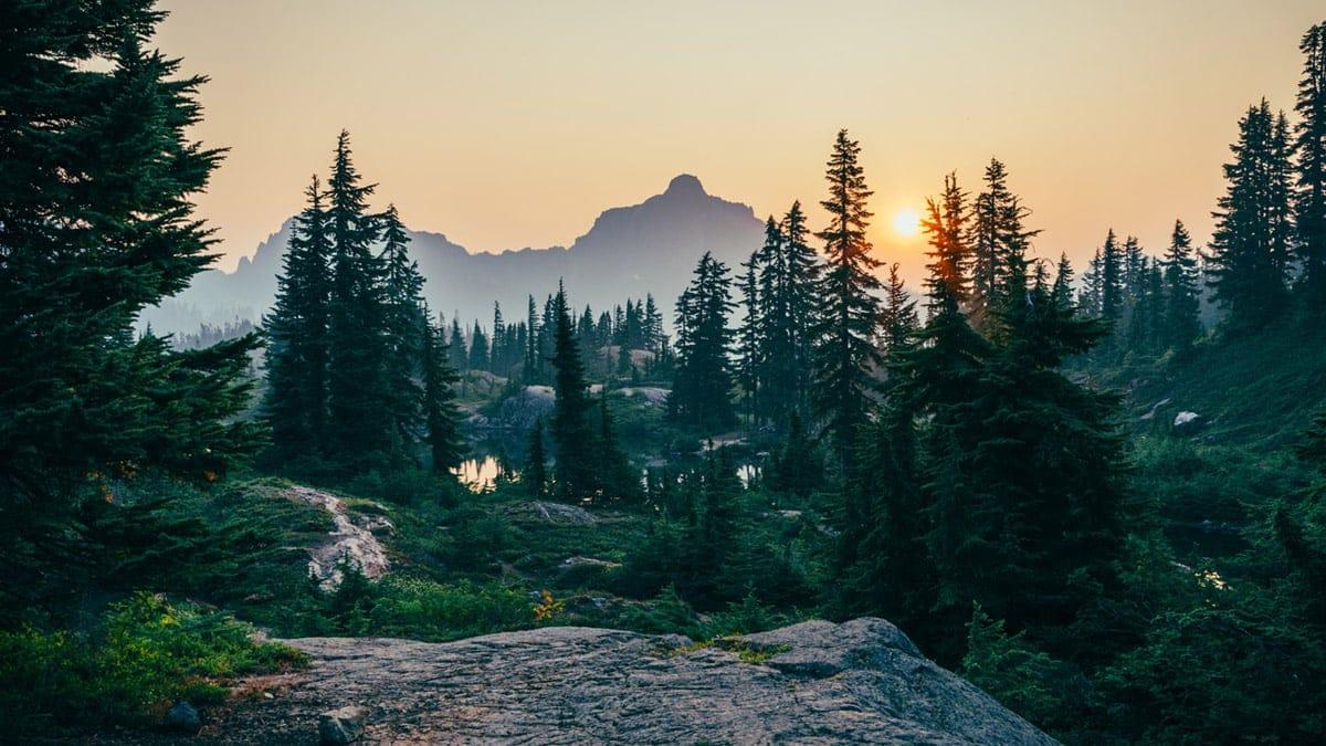 Waldbaden hilft gegen Ängste und Depressionen
